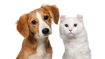 Perro y gato mirando al frente