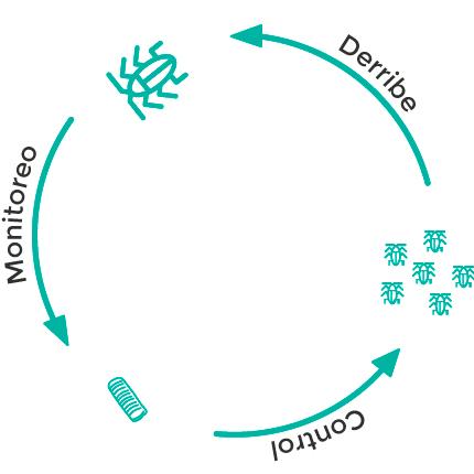 ciclo reproductivo de las cucarachas